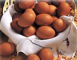 Huevos alimento de Ucayali