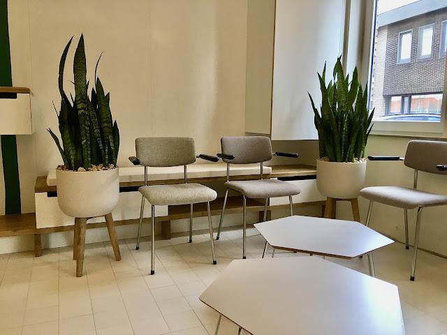 Sansevieria planten en design plantenbak op poten met klimrek voor binnen of buiten op terras in beton hout riet pvc metaal in Limburg Vlaams Brabant Antwerpen Brussel
