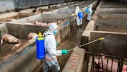 FDA warns anew, expands pork import ban affected by african swine fever