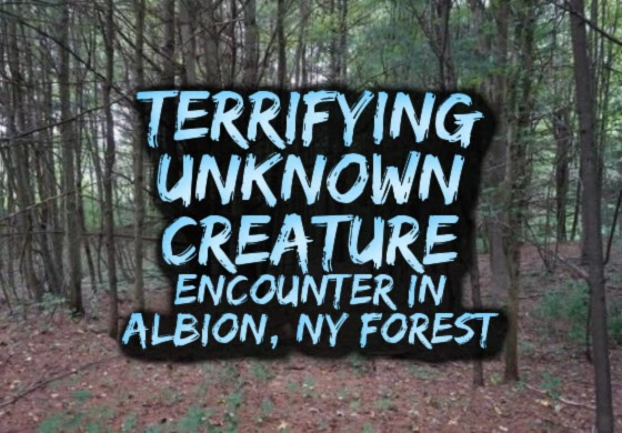 Terrifying Unknown Creature Encounter in Albion, New York Forest