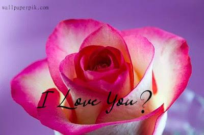 rose wallpaper pink rose wallpaper love rose wallpaper gallery new