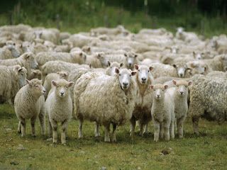 Profecia contra os pastores de Israel