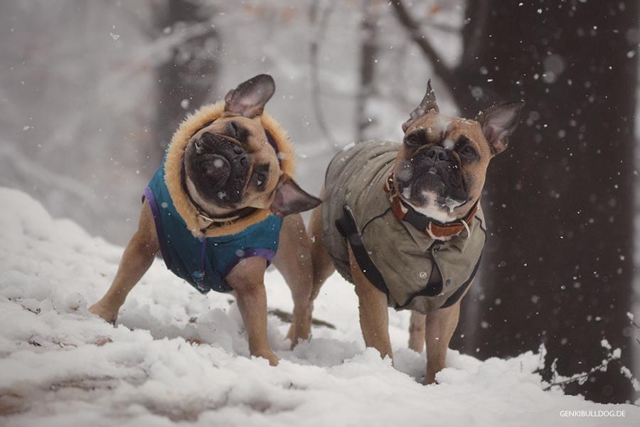 Shake It Sich schüttelnde Hunde