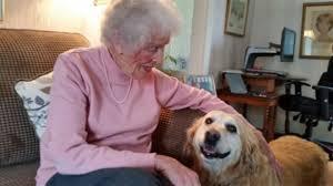 idosos com cães