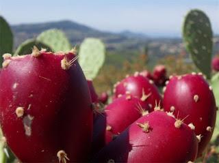 Kaktüs Meyvesi Faydaları