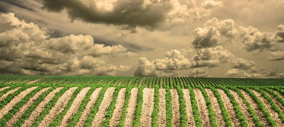 Τη λήψη μέτρων στήριξης αγροτών εξετάζει η Ε.Ε.