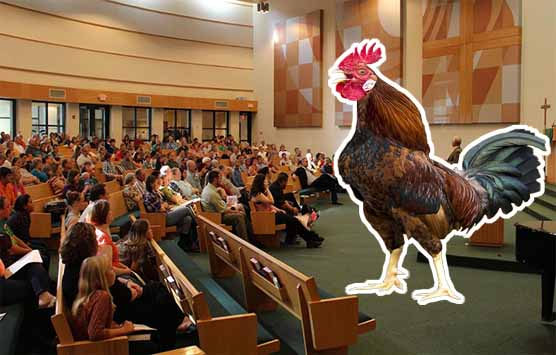 A church congregation seated and a cock standing in front of them