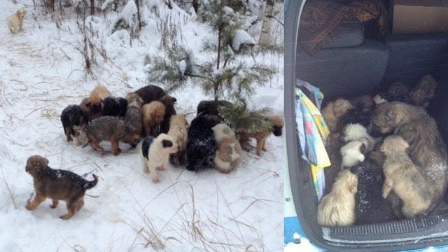 Мужчина увидел брошенных щенков в зимнем лесу!