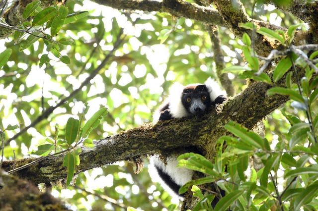 Climate change and deforestation could decimate Madagascar's rainforest habitat by 2070