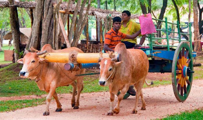 Essay On A Bullock Cart in 250 Words in English for student
