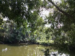 Village pond image