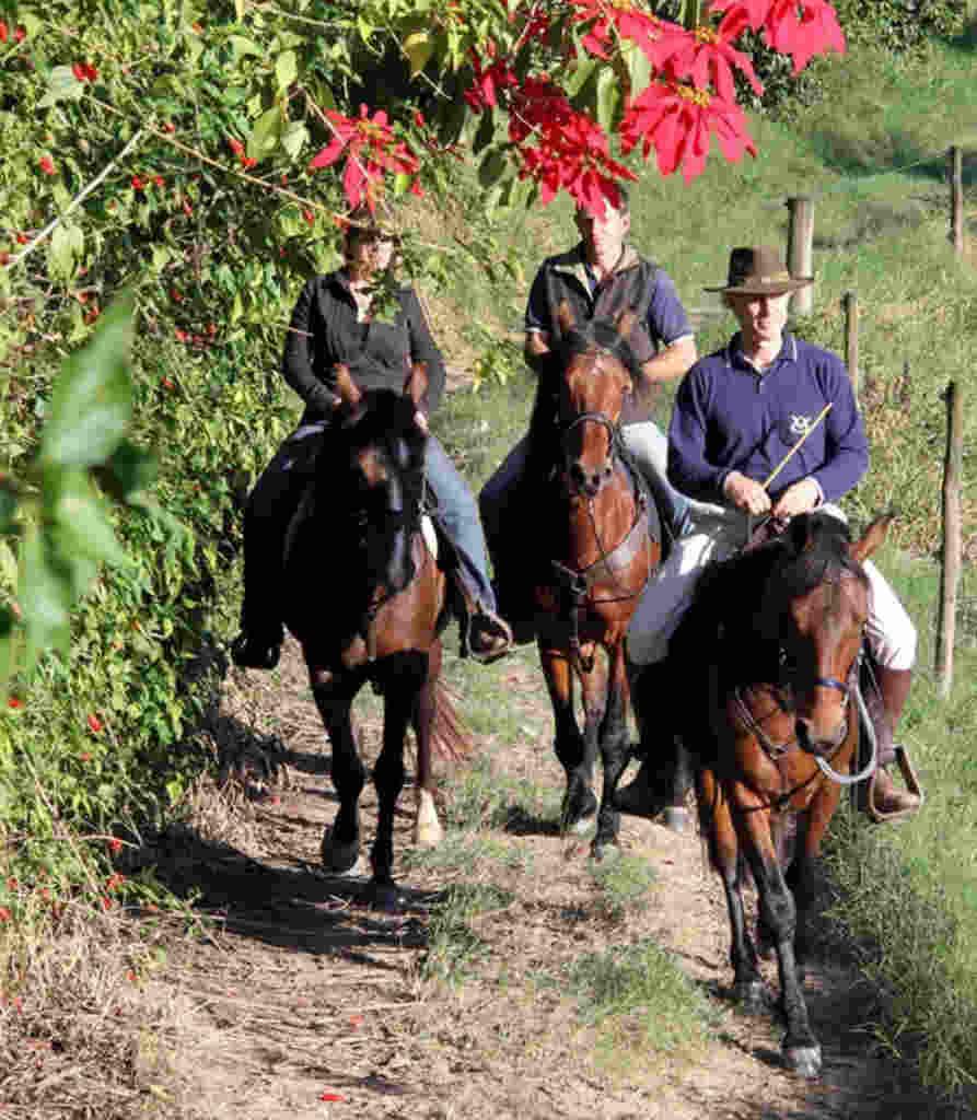 O criador de cavalos e cavaleiro Ricardo Bacellar, do Haras das 8 Virtudes, em Amparo/SP, abre as portas de sua fazenda para oferecer um programa personalizado de cavalgadas.