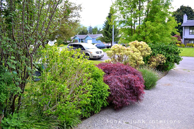 An overgrown shrub flowerbed is about to get a garden path makeover!