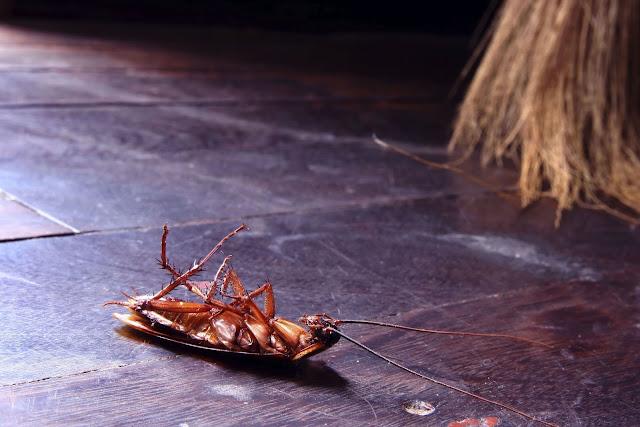 eliminar cucarachas desinfectación sevilla