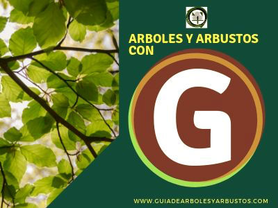Arboles y arbusto con g. Listado de especies que empiezan con la letra f