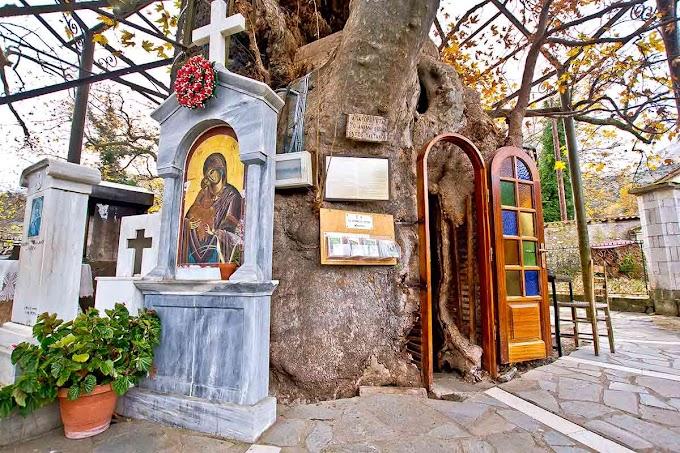 Παναγία η Πλατανιώτισσα της Αχαϊας - Το εκκλησάκι μέσα σε ένα τεράστιο πλάτανο