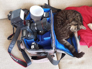 Jessops camera bag and cat