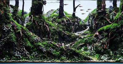 Gambar Aquascape Tema Hutan