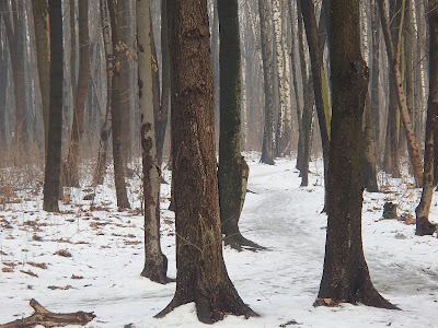 grzyby w lutym, grzyby zimowe, grzybobranie w zimie