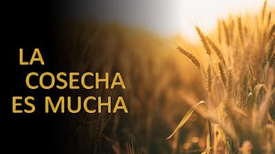 Evangelio según san Mateo (9, 35–10, 1. 6-8): Vayan en busca de las ovejas perdidas de la casa de Israel