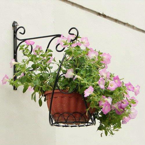Plantas colgantes para interiores - Plantas colgantes interior ...