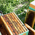 """Σφίξιμο"""" των μελισσιών για ξεχειμώνιασμα και το ...μέλι απ' έξω"""