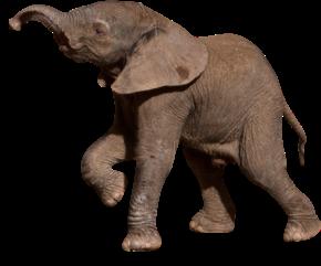 Todo sobre animales for Muebles elefante