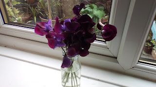 Sweet peas on a windowsill in a small bottle
