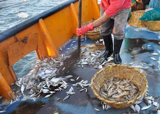 http://nuevamiradaalmar.blogspot.com.es/2016/01/descartes-de-pesca.html