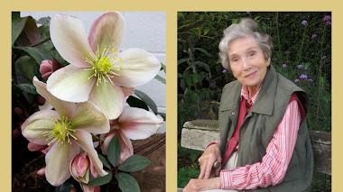 Beth Chatto y la selección de plantas
