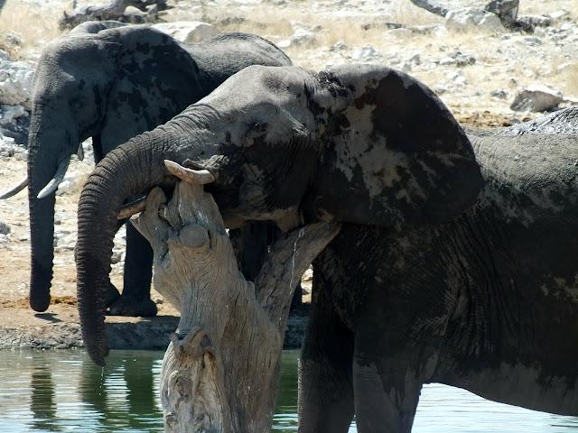 Familia de elefantes en Etosha