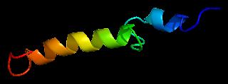 ما هو تحليل هرمون الغدة جار درقية parathyroid hormone) PTH)