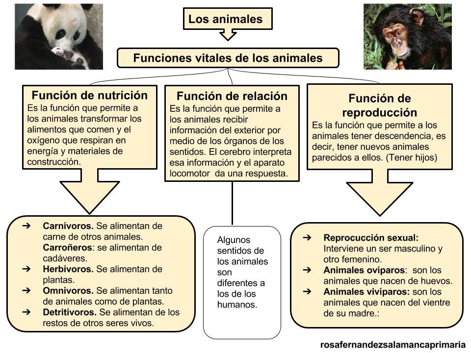 Maestra de Primaria: Esquema del tema Los animales. Clasificación de ...