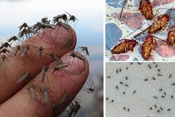 cum sa scapam de insecte