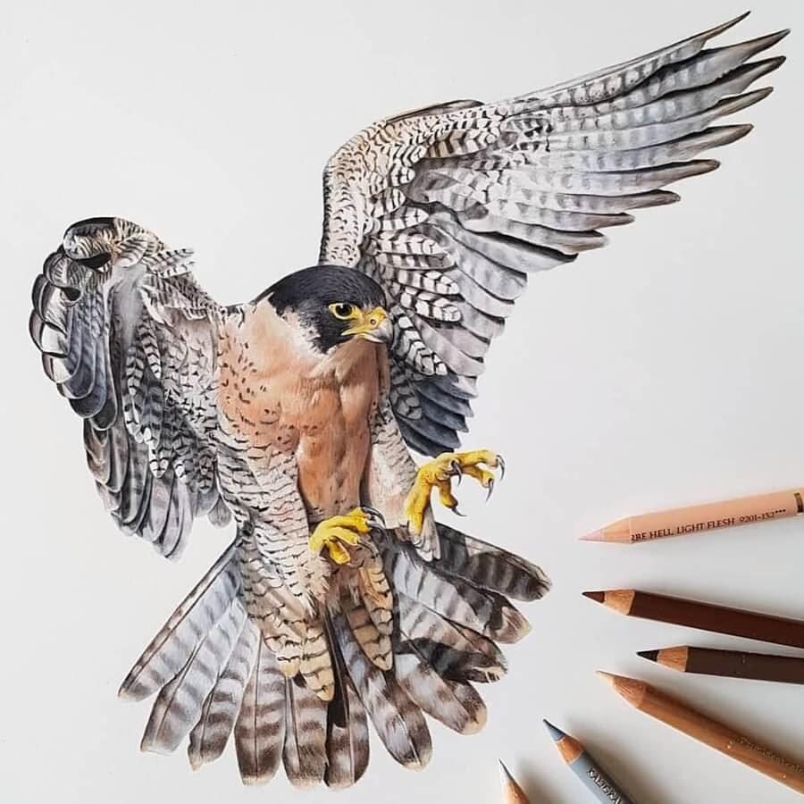 01-Bird-of-Prey-Paula-www-designstack-co