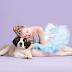 Όταν οι μπαλαρίνες φωτογραφίζονται με αδέσποτους σκύλους για να τους βοηθήσουν...