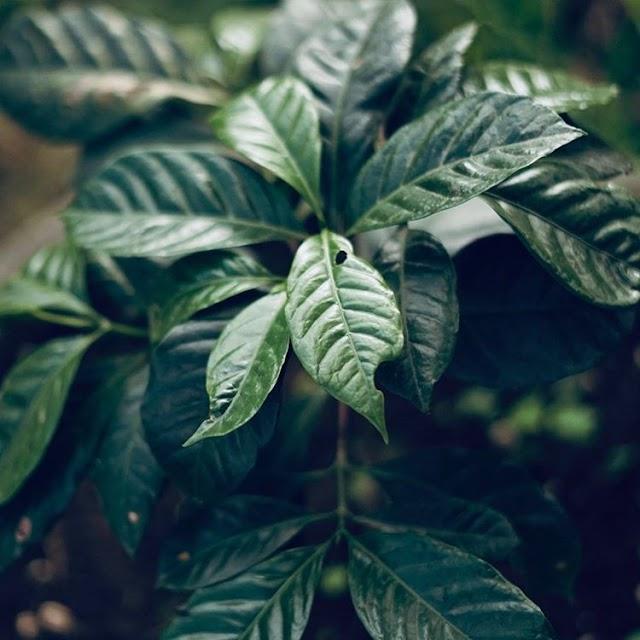 Mahaprau Project Upaya Melestarikan Alam