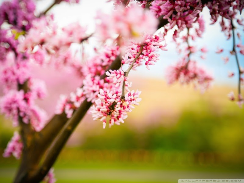 spring pink 25 Best Wallpapers For HTC Nexus 9