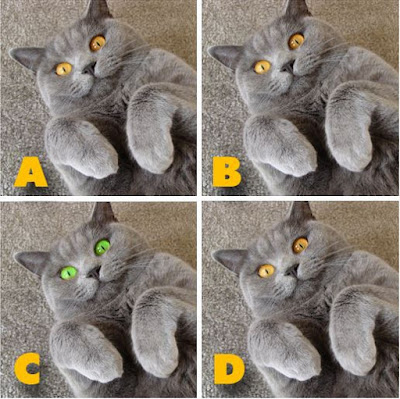 Which image is different? image 17