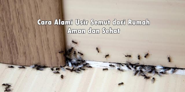 cara membasmi semut