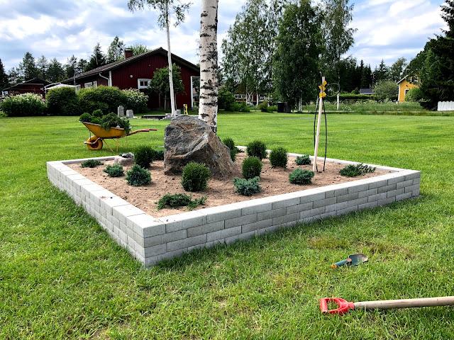 Sinikataja, pallotuija, tuivio, laakakataja, kasvien valitseminen, istuttaminen, puutarha, havut, istutusallas, istutusaltaan rakentaminen, pihatyöt, muurikivi, pihakivi, tiiliskivi, lakka
