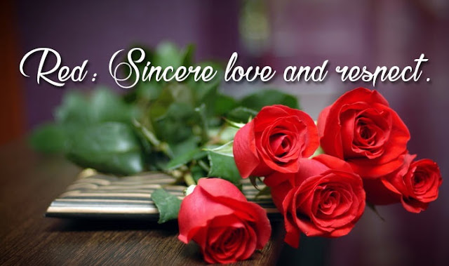 rose day images latest