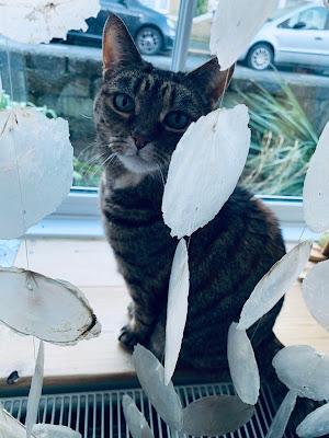Tortoiseshell cat sitting on windowsill behind a shell curtain