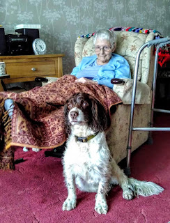 Dog sits at Granma's feet, eyes shining with love