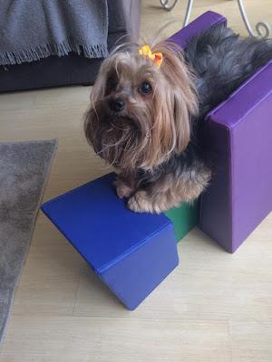 pet postura para permanência de cães