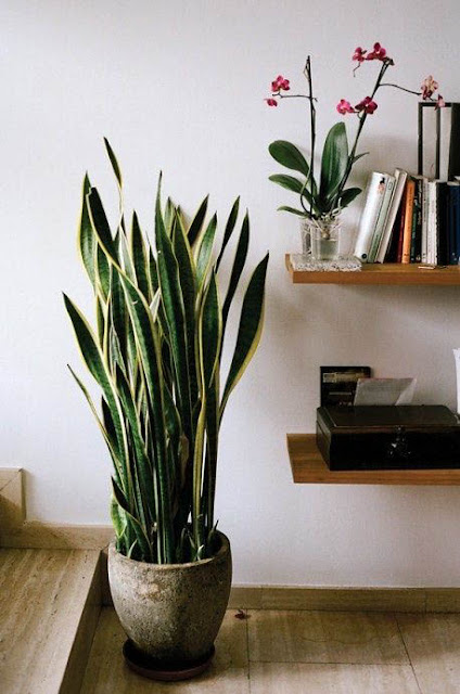 Plants That Can Be Grown Indoors