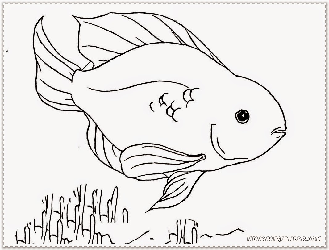 carp fish coloring pages