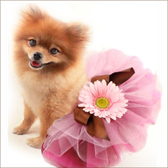 Classic Pet Tutu Triple Beauty