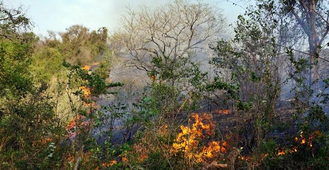 Incêndio próximo à CMEI de Nova Cantu