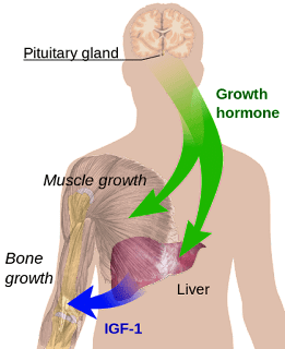 growth_hormones_structure
